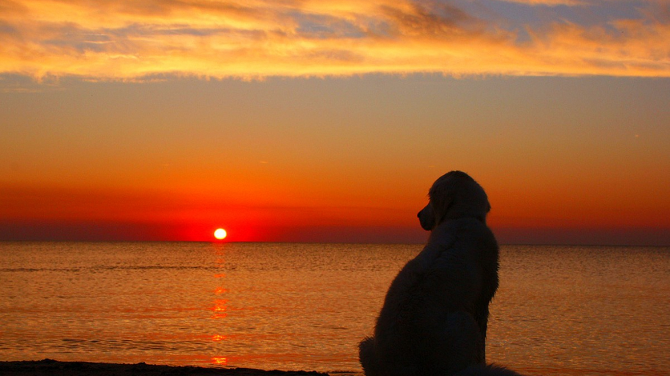 Cape May Pet Friendly Sunsets
