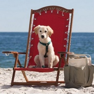Cape May's Best Pet Friendly Trip Advisor